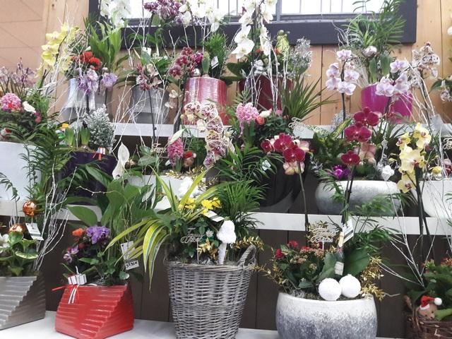 Les plantes et fleurs à l'honneur en Janvier