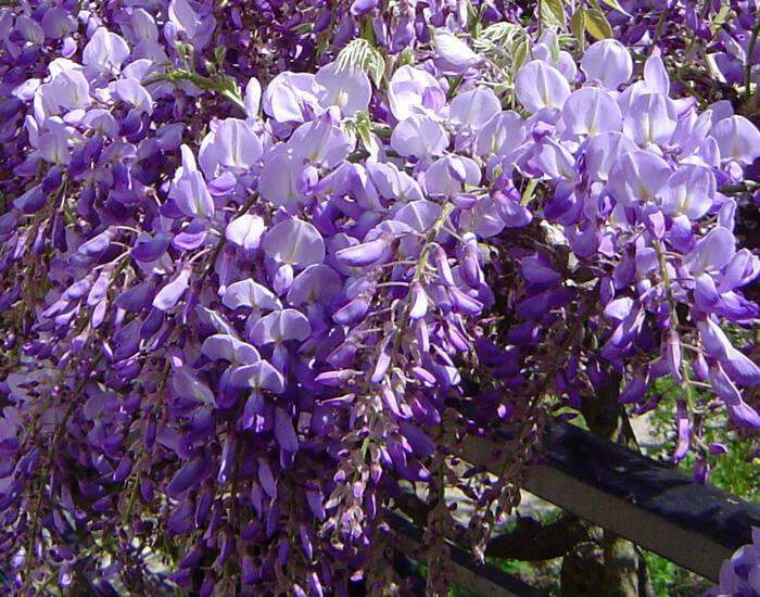 Le mois de mai, des fleurs et des odeurs !