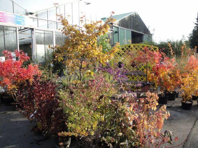 Planter ses arbres et arbustes - 7 Novembre 2015