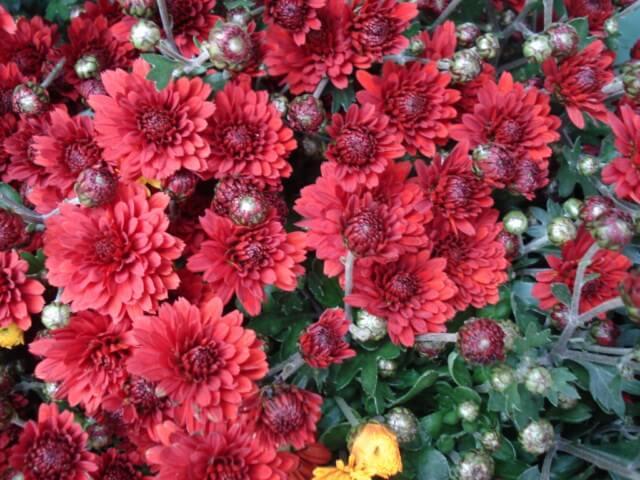 Apprendre à créer ses propres jardinières - 17 octobre 2015