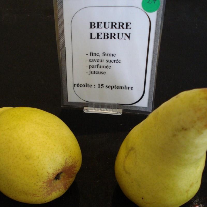 Vente en ligne de POIRIER - Pyrus communis 'Beurré Lebrun' 1