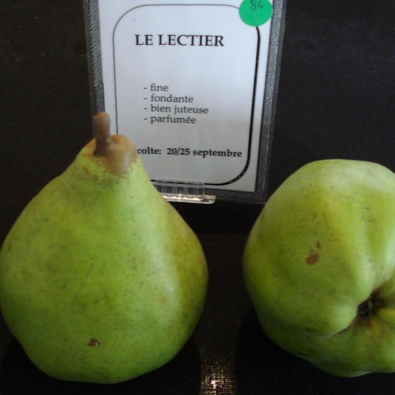 Vente en ligne de POIRIER - Pyrus communis 'Le Lectier' 1