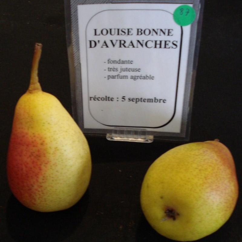 Vente en ligne de POIRIER - Pyrus communis 'Louise Bonne d'Avranches' 2