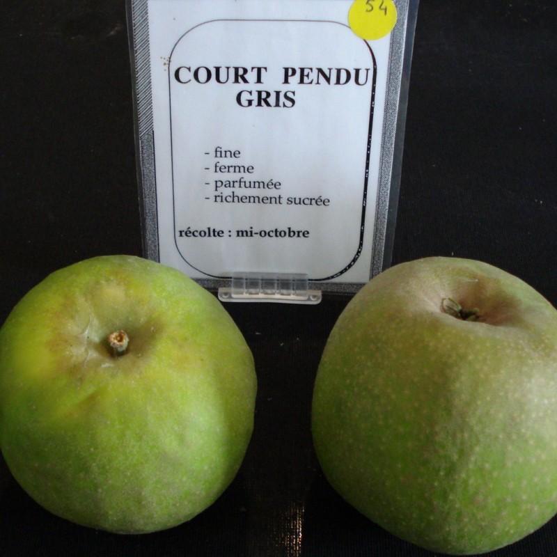 Vente en ligne de POMMIER - Malus communis 'Court-pendu gris' 1