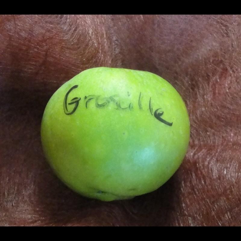 Vente en ligne de POMMIER - Malus communis 'Groseille' 1