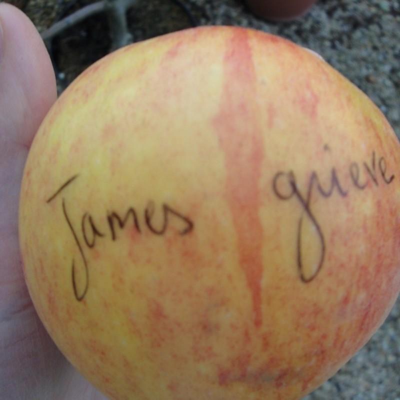 Vente en ligne de POMMIER - Malus communis 'James Grieves' 1