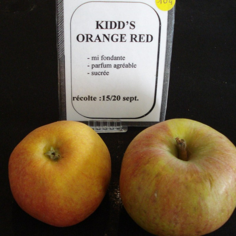 Vente en ligne de POMMIER - Malus communis 'Kids orange red' 1