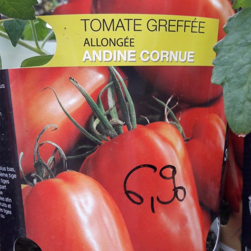 Vente en ligne de Plant de TOMATE - SOLANUM lycopersicum 'Andine Cornue' 2