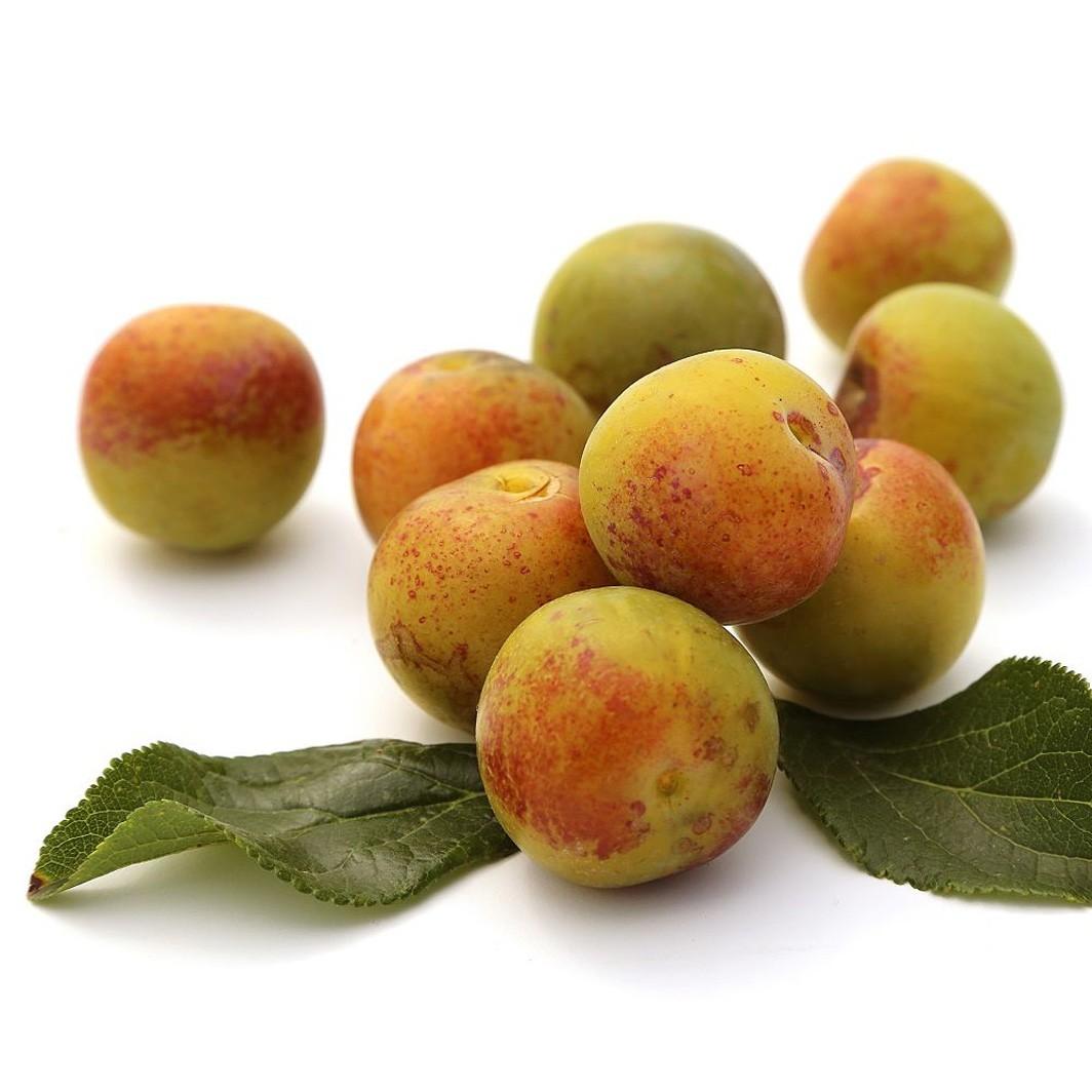 Achat PRUNIER - Prunus domestica 'Reine Claude de Chambourcy'