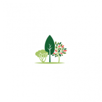 Rhododendron à grande végétation