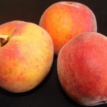 PECHER - Prunus persica 'Dixired'
