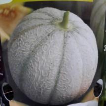 Plant de MELON - CUCUMIS melo 'Amigo'