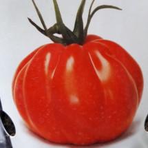 Plant de TOMATE - SOLANUM Lycopersicon 'Corazon'