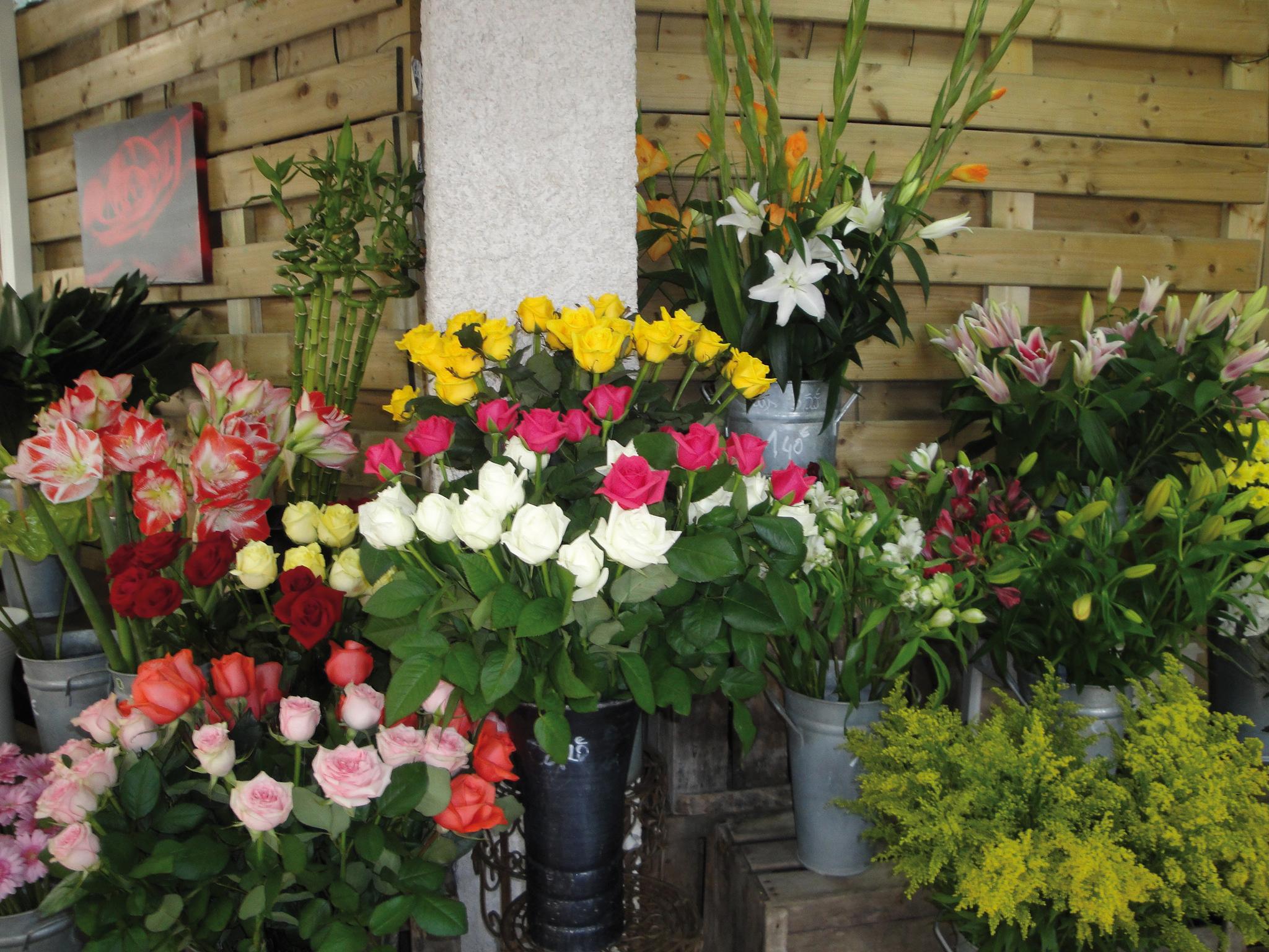 Jardinerie Pas Cher Toulouse jardinerie en ligne : achetez vos plantes, arbres, arbustes
