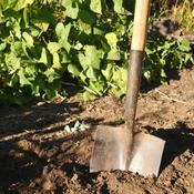 Comment préparer votre jardin à l'approche de la saison hivernale