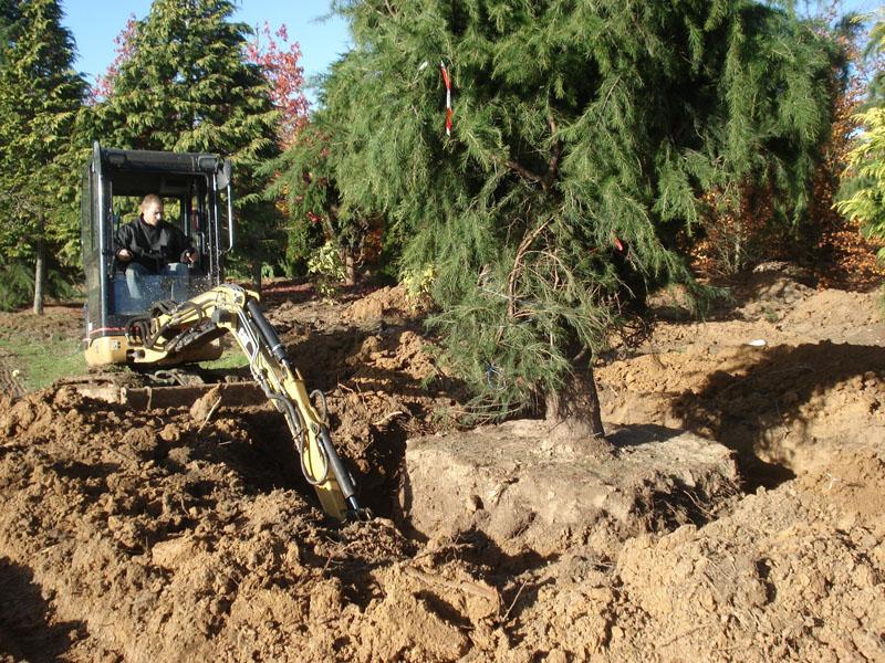 Blog p pini res chatelain - Plantation arbre en motte ...
