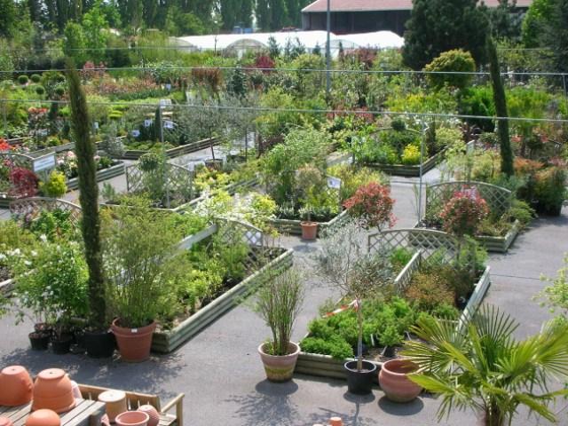 Jardinerie rayon pepiniere