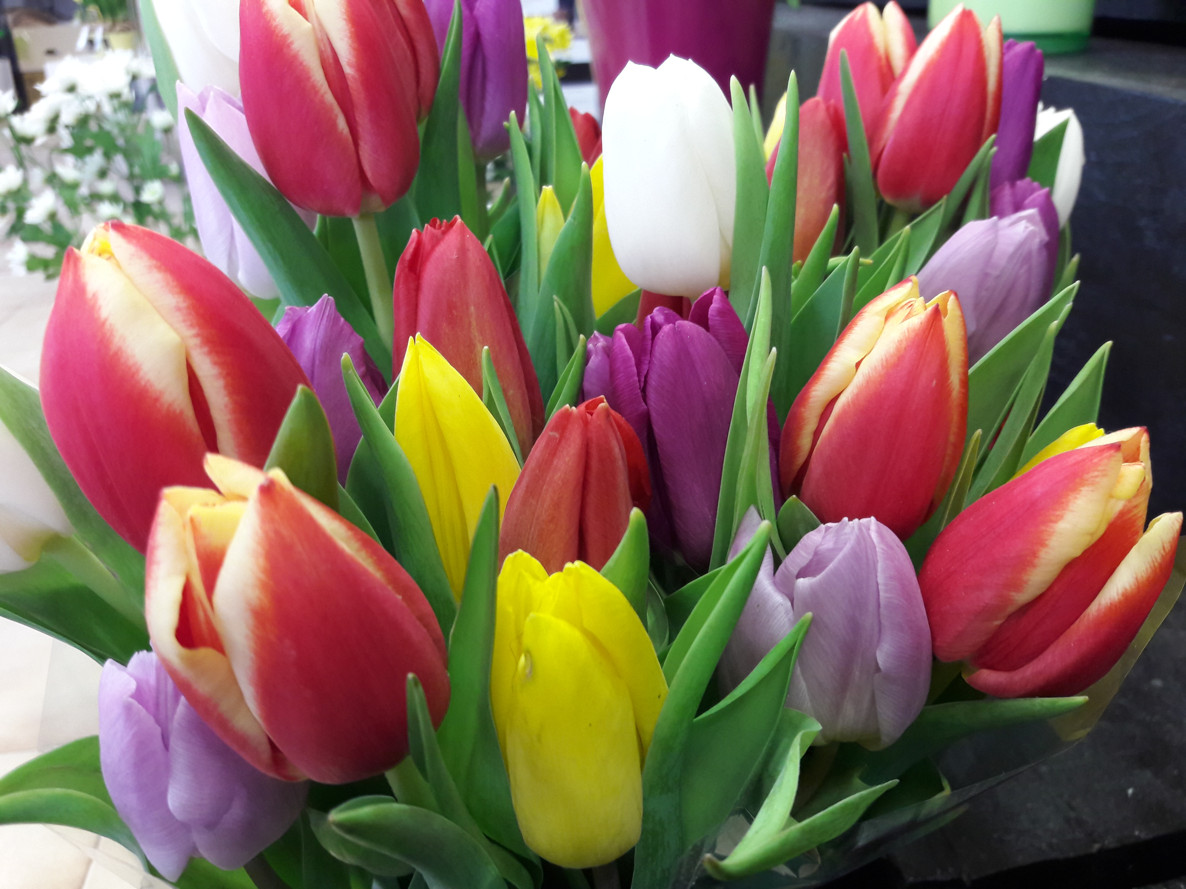 tulipes - fleurs coupées