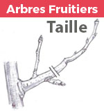 Encart taille arbres fruitiers