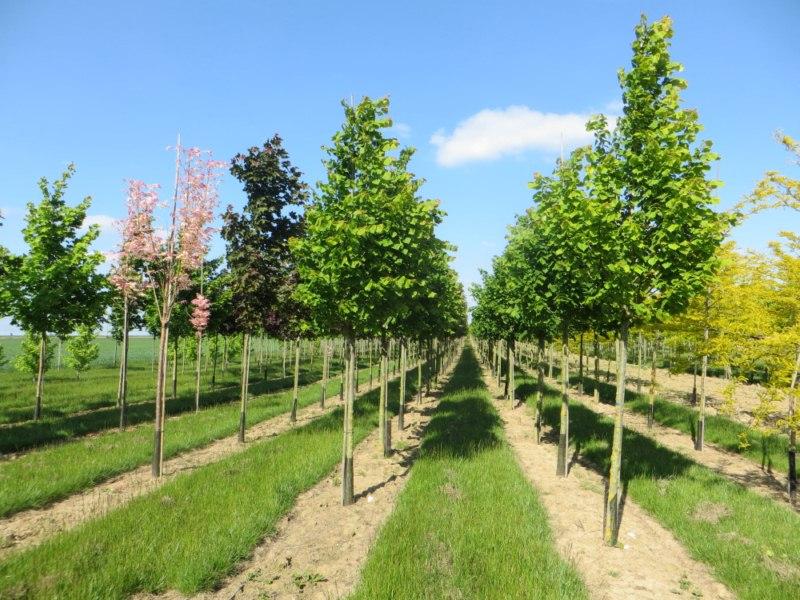 Production arbres